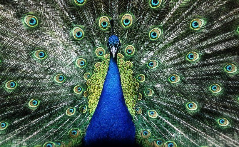 uhke lind välja sirutamas oma tiibu
